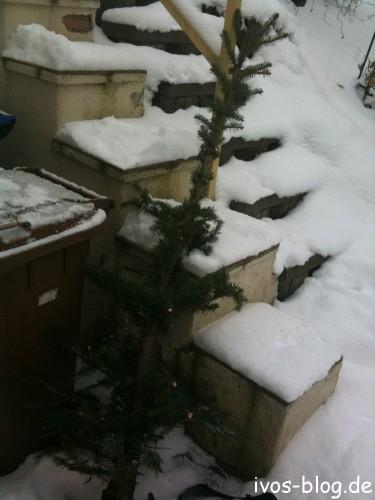 Kastrierter Weihnachtsbaum 2010